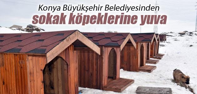 Konya Büyükşehir Belediyesinden sokak köpeklerine yuva