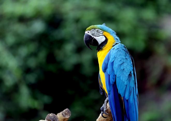 ''Aşkın Kanatları'' Tropikal Kelebek Bahçesi