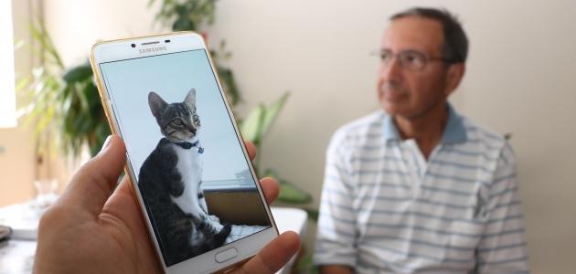Beyşehir'de kaybolan kayıp can dostları kediyi bulana ödül verecekler