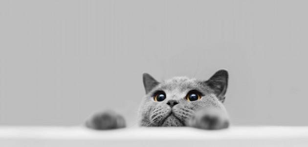 Evde Beslenilebilecek Kedi Türleri