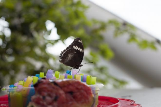 Fotoğraf stüdyosu gibi kelebek bahçesi