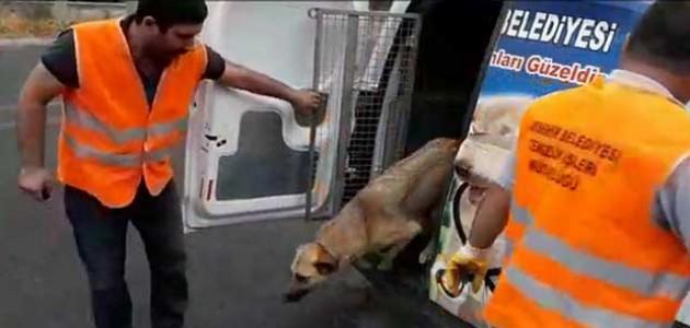 Akşehir Belediyesi sokak hayvanlarına sahip çıkıyor