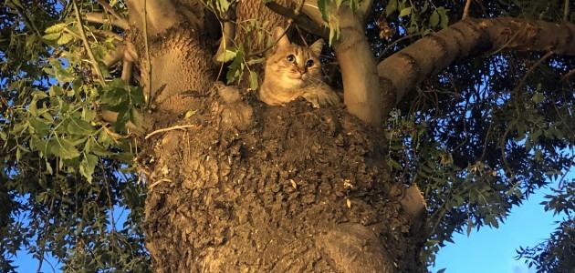 Köpekten korkan kedi 2 saat ağaçta mahsur kaldı