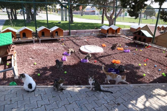 Konya'da sokak hayvanlarına