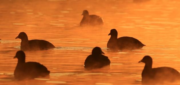 Mogan Gölü'nde sabah...