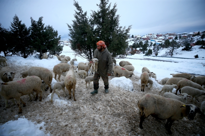 Karla kaplı yaylalarda çobanların zorlu mesaisi