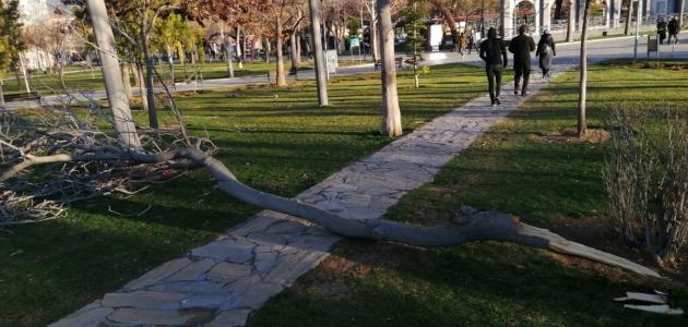 Konya'da fırtına cami minaresini yıktı, ağaçları devirdi