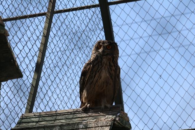 Hayvanat bahçesinde hayvanların bakımları eksiksiz yapılıyor