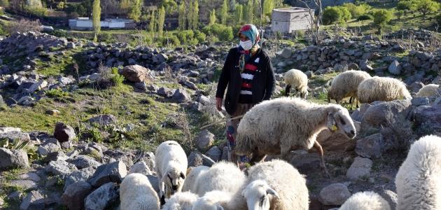 Tarihi mahallenin kadın çobanının tek dostu koyunları