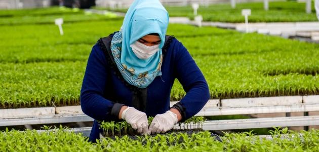 Meram sebze üretim tesisinde fide satışları başladı