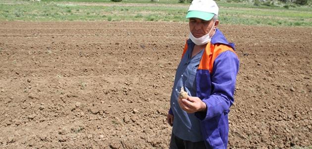 Gembos Ovası'nda çiftçiler sokağa çıkma günlerinde de tarımsal mesaide