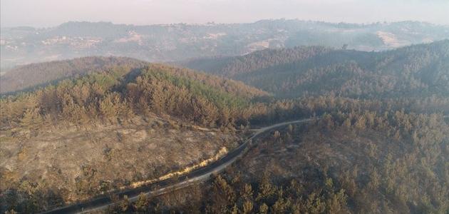 Bakan Pakdemirli: Orman yangını kontrol altına alındı