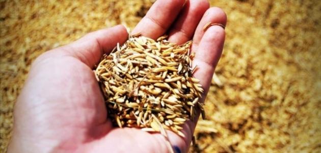 Sertifikalı tohum üretimi 18 yılda 8 kat arttı