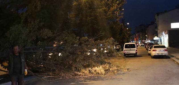 Fırtına ağaçların dallarını kırıp yola savurdu