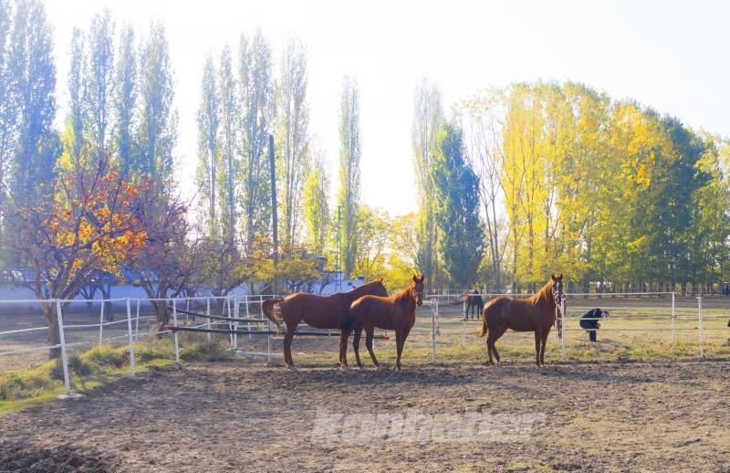 Bozkırın ortasında şampiyonlar yetiştiren haralar ziyaretçilerine at sevgisini aşılıyor