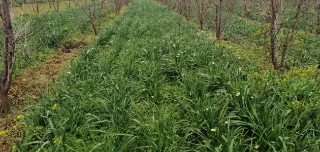 Dolu yağışı 600 dekar tarım arazisine zarar verdi