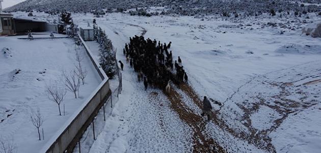 Çobanlar yoğun kar yağışının zorluklarında keçilerini besliyor