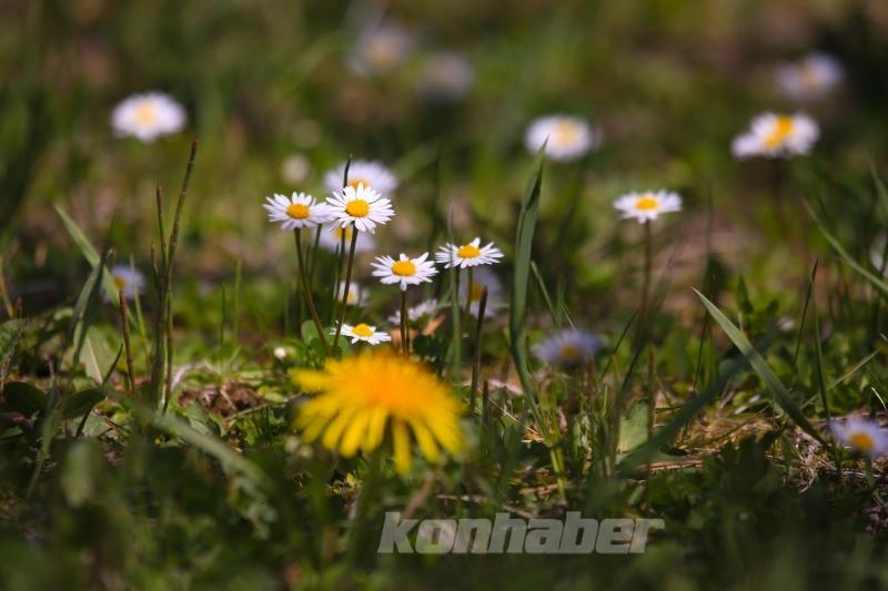 Konya'da bahar