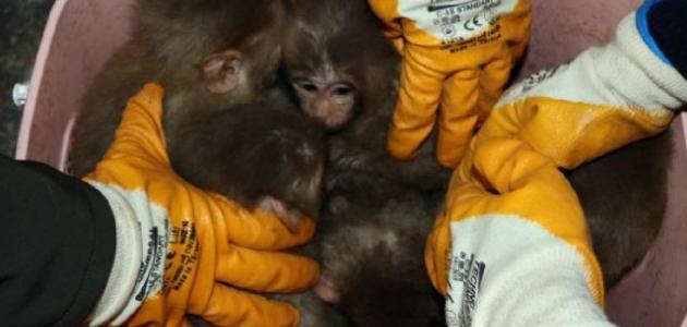 Gürbulak Gümrük Kapısı'nda 12 yavru maymun yakalandı