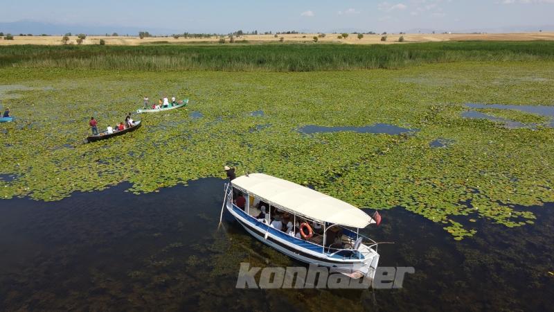 Doğaseverlerin Beyşehir Gölü'ndeki nilüferlere ilgisi, tekne gezilerini artırdı