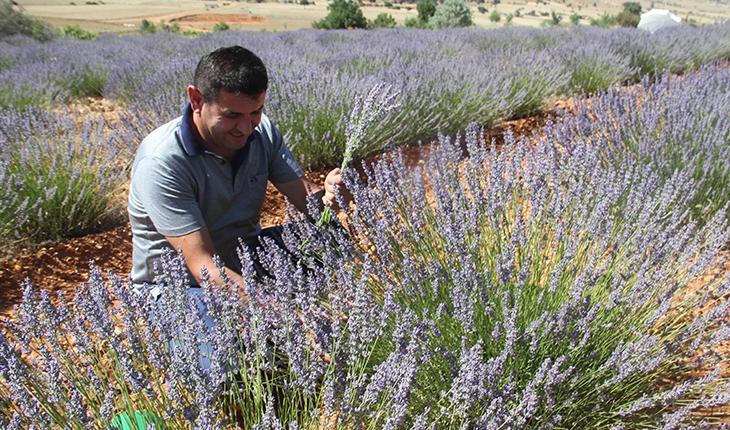 Konya'nın lavanta kokulu köyünde hasat başladı