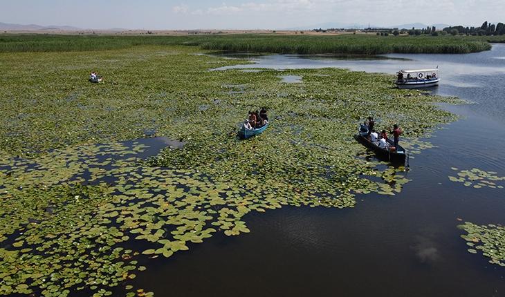 Beyşehir Gölü'ndeki nilüferlere ilgi, tekne gezilerini artırdı