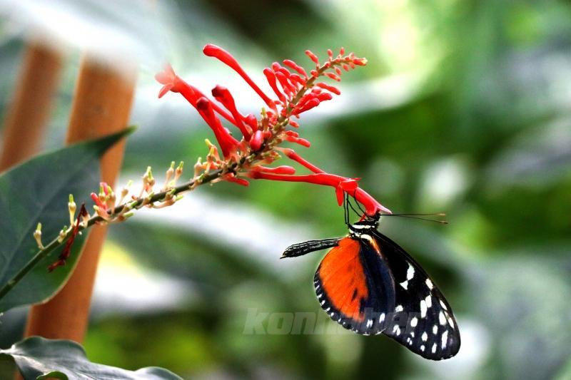 Tropikal Kelebek Bahçesi'nin renkli ev sahipleri