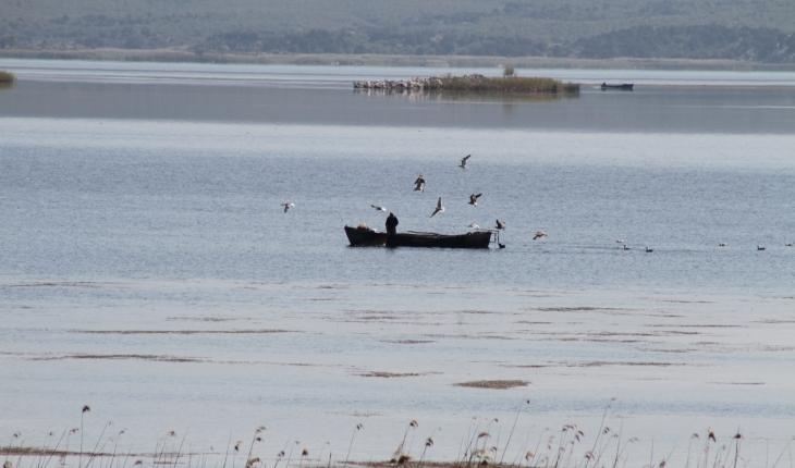Beyşehir Gölü'nde teknelerinin peşine takılan martıların balık kapma yarışı